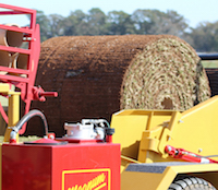 A survey of the state's sod inventory is conducted each year by University of Georgia Cooperative Extension and the Georgia Urban Ag Council. Each year, Georgia sod producers and other members of the industry, including equipment manufacturers, gather for the annual Sod Field Day. This photo shows a sod harvester being demonstrated.