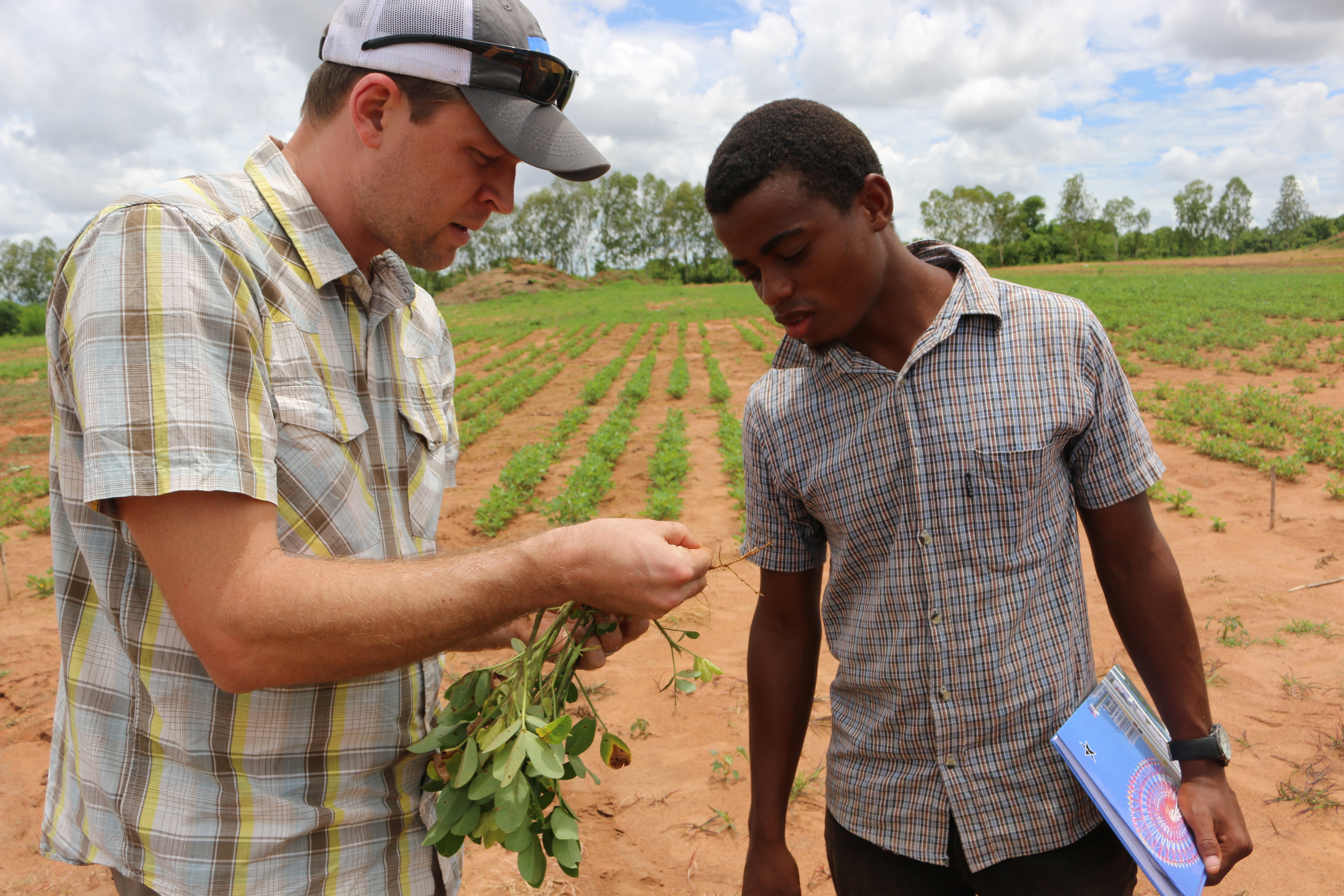 Jamie Rhoads, then-assistant director of the Peanut & Mycotoxin Innovation Lab at UGA, shows Mozambican student root nodulation on a peanut plant in Montepuez, Mozambique in January 2017. The federal government recently awarded the University of Georgia another five-year program to work with scientists in the U.S. and partner countries to increase global food security through peanut.