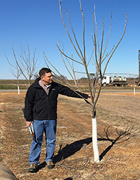Lenny Wells conducts a pecan pruning clinic in Wilcox County on Jan. 31, 2018.