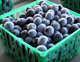 There is currently little to no science-based information on the efficacy and safety of most essential oils in pest management of fruit crops like blueberries, so a multistate team is working together to learn more.