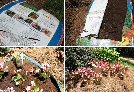 Annual flowers can be planted directly in soil bags to save time amending soil.