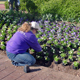 Commercial landscapers will learn everything from plant selection to equipment selection at a University of Georgia workshop set for April 1 in Griffin, Ga.