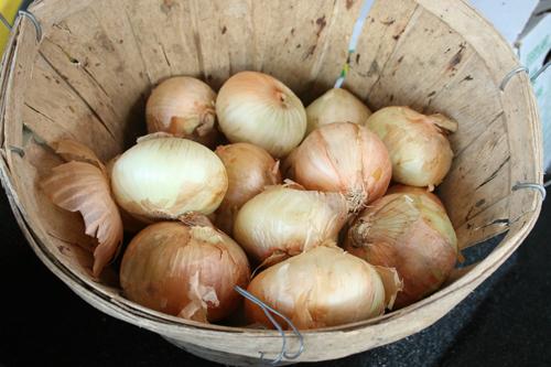 Sweet Vidalia onions in a basket at a roadside stand in Tattnall County, Ga.