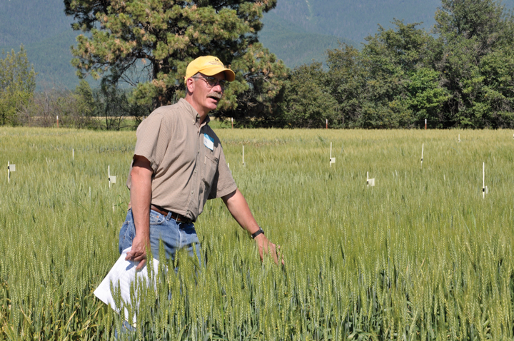 Robert Stougaard's research has focused on the biology and management of the wheat midge, management of stripe rust, the development of competitive cropping systems for the control of wild oat, and the effects of environmental and varietal factors on falling numbers in wheat.