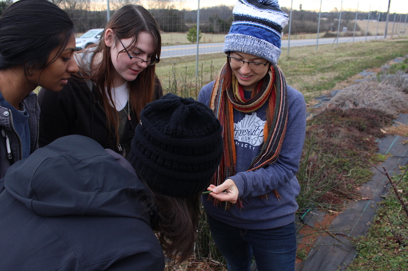 Noelle Fuller, the UGArden Medicinal Herb Program coordinator and head herbalist, shows her interns how to propagate a horsetail plant. They cut pieces off already existing plants, and place them in water, to create new plants for their plant sale in May.