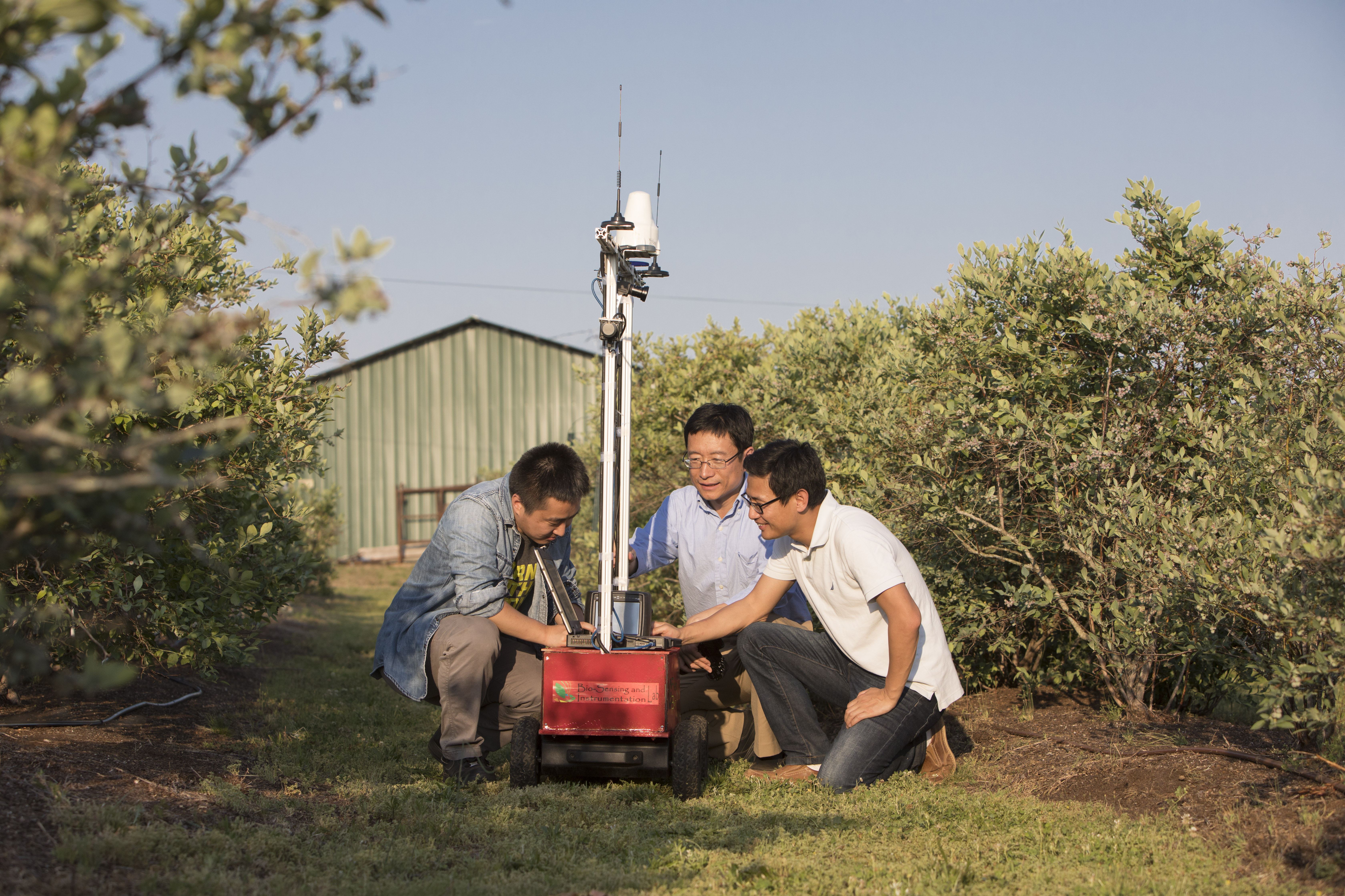 Professor Changying (Charlie) Li works with graduate students (L-R) Yu Jiang and Shangpeng Sun with a robot in a blueberry field. Li is heading a new research initiative at UGA, the Phenomics and Plant Robotics Center. The center will spearhead new research into using robots, sensing and data analysis to help aid the development of new crop varieties.