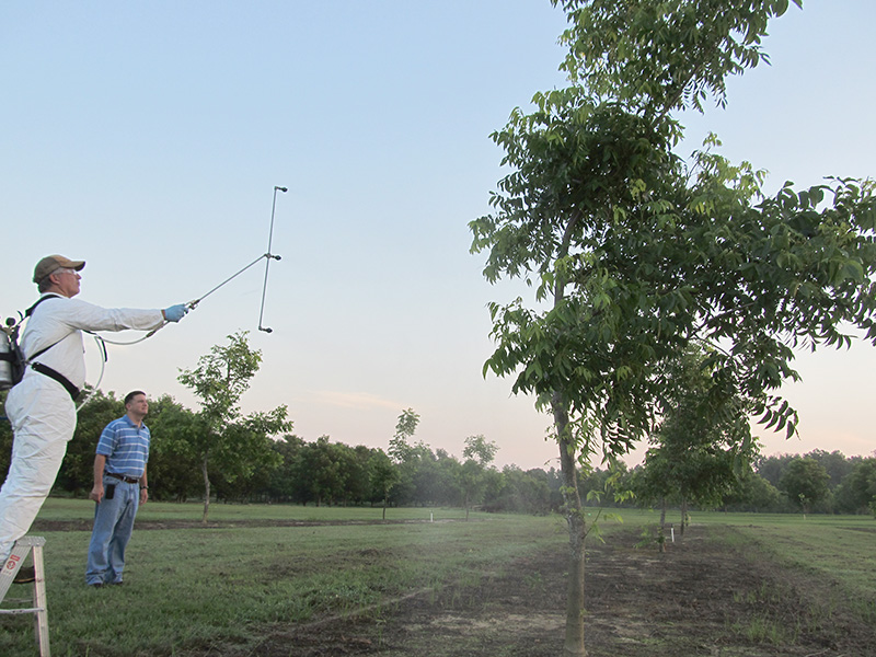UGA Extension weed specialist Eric Prostko sprays a pecan tree during a research study with Extension pecan specialist Lenny Wells.