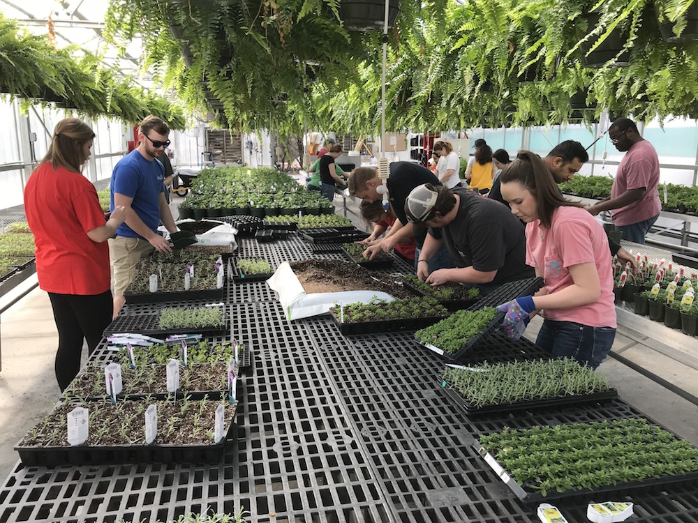 Students in the UGA Horticulture Club prepare for their Spring Plant Sale, which will be held April 6-8 and April 12-15.