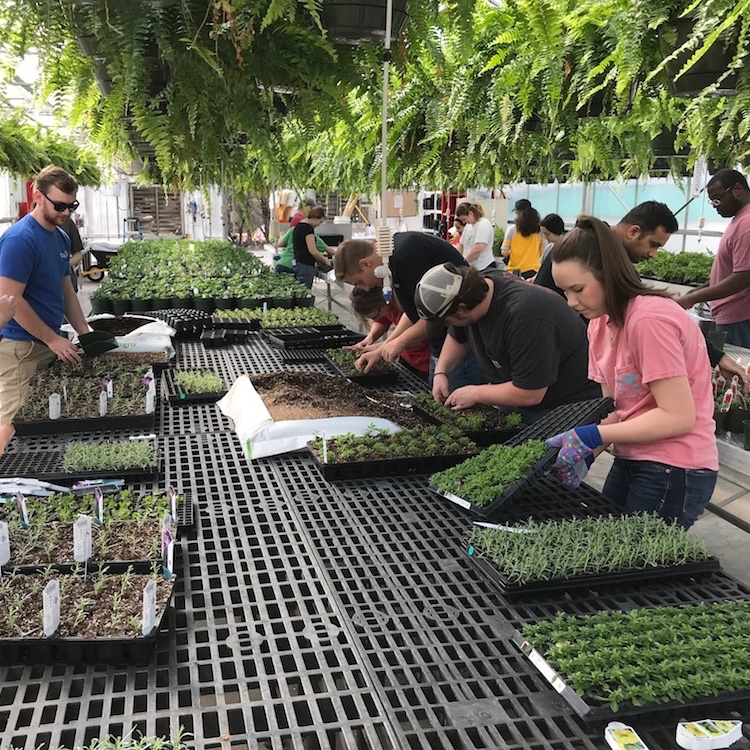 Greenhouse management training gives UGA horticulture graduates an advantage in the industry when looking for jobs.