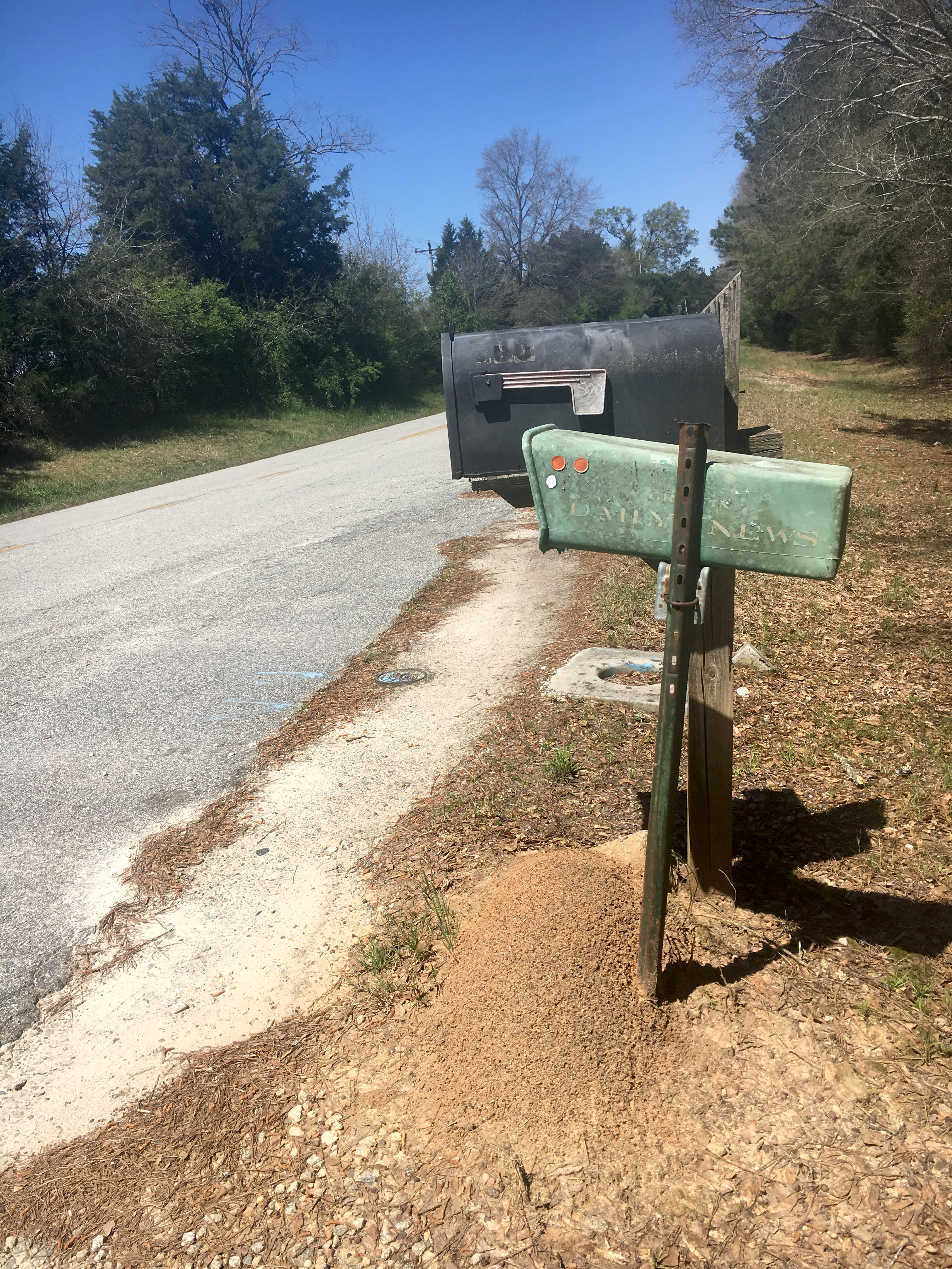 Mounds of red imported fire ants are often found popping up in pastures and in unique spots, like beside this mailbox post in Griffin, Georgia.