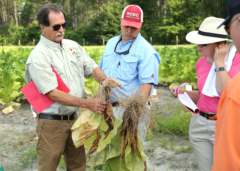 Alex Csinos, Professor Emeritus in Plant Pathology, talks about tobacco during the Tobacco Tour at UGA-Tifton on June 13, 2018.