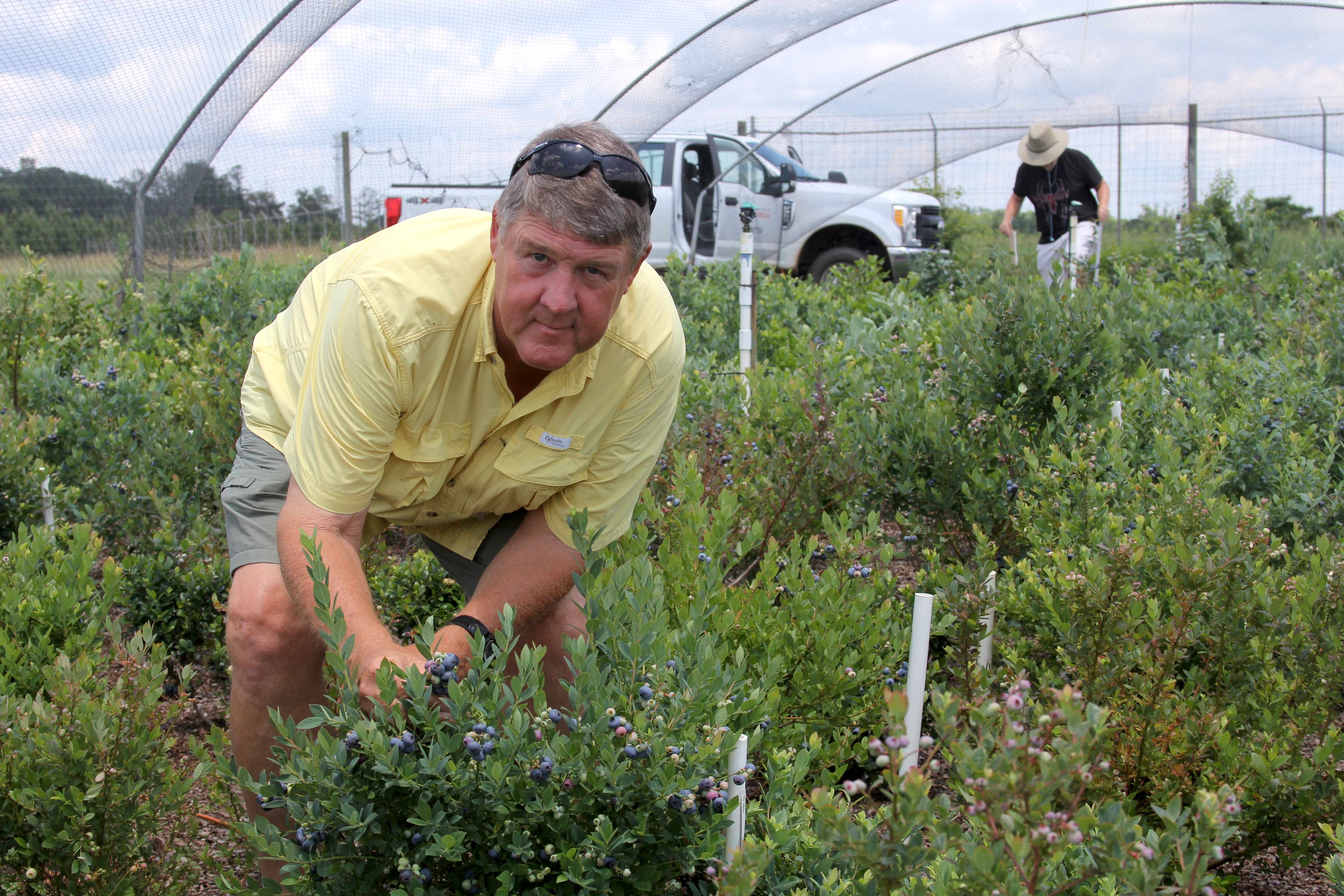 On the campus in Griffin, Georgia, UGA blueberry researcher Scott NeSmith typically breeds new varieties to meet growers' needs. Now, he's released some ornamental blueberries that are perfect for growing in home landscapes and will help home gardeners grow their own fresh fruit.