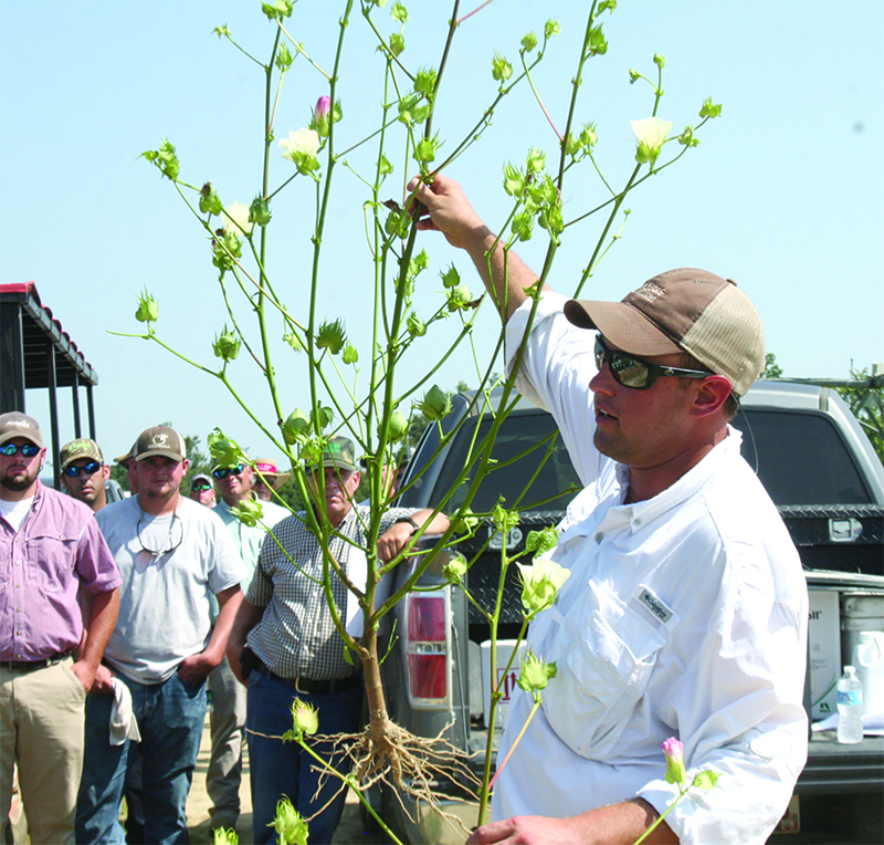 Jared Whitaker, UGA Extension cotton agronomist, speaks during the Midville Field Day in 2014.