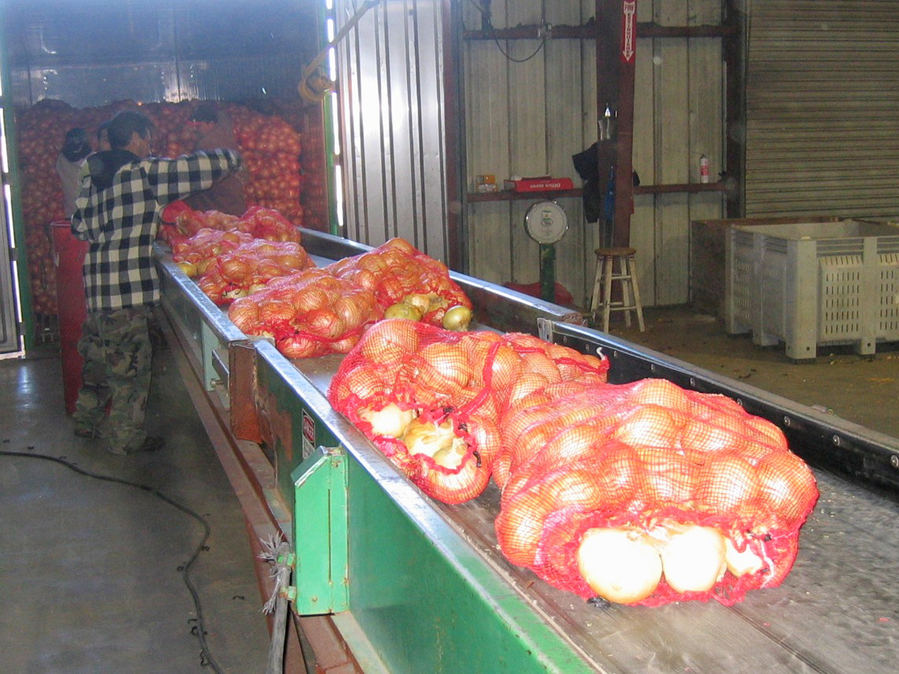 Onions are bagged at Bland Farms before storage and shipment.