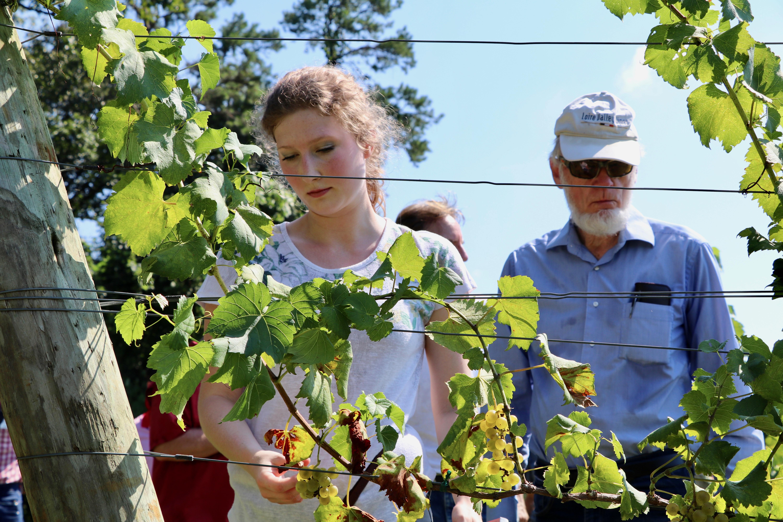 Aspiring grape grower Rachel Crow and wine science aficionado Joe Adams examine grape vines at Stonepile Vineyards in Clarkesville, Georgia, during the inaugural UGA Cooperative Extension Viticulture Team Vineyard Tour.