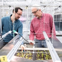 Erico Mattos (left) co-founded his startup company Candidus with Mark van Iersel, Dooley Professor of Horticulture, CAES. Candidus uses lighting sensors to improve greenhouse farming production. (Photo by Dorothy Kozlowski/UGA)