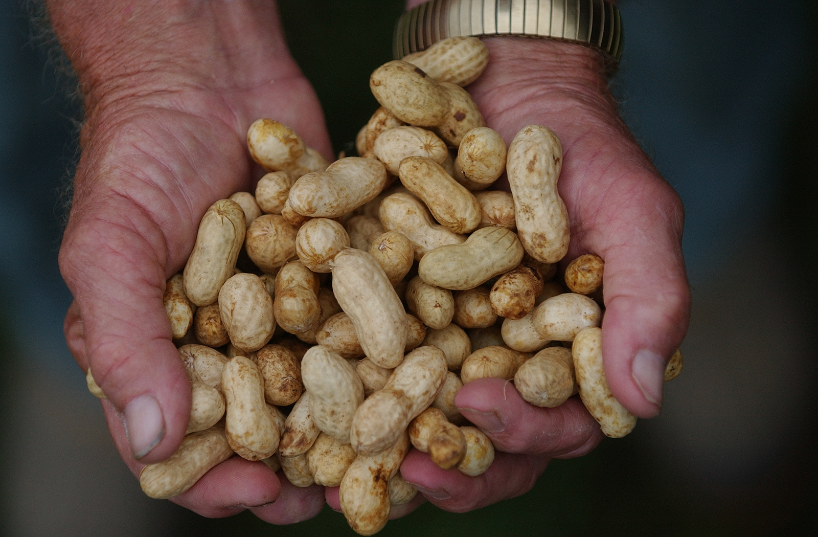 "Georgia is the No. 1 producer of peanuts in the U.S. and Georgia growers grow 50 percent of the nation's total production. University of Georgia Cooperative Extension peanut entomologist Mark Abney says peanuts are one of the most sustainable crops. ""They do not require pollinators, require minimal insecticides, and produce the best quality and yield with the lowest level of input from growers."""