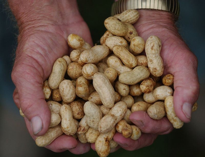 Georgia is the No. 1 producer of peanuts in the U.S. and Georgia growers grow 50 percent of the nation's total production. University of Georgia Cooperative Extension peanut entomologist Mark Abney says peanuts are one of the most sustainable crops.