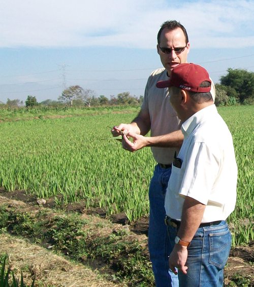 University of Georgia plant pathologist James Buck is shown meeting with a gladiolus grower in Mexico. Buck is working to learn more about a rust that causes lesions on the plant's leaves.