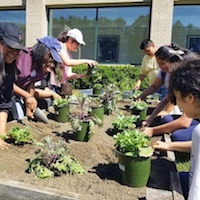 Students at Gwinnett County's Radloff Middle School tended their kale plants earlier this fall. They later turned these plants into centerpieces for the Georgia Organics Golden Radish Awards.