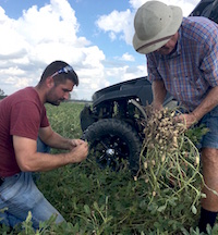 University of Georgia Cooperative Extension agent Andrew Warner and peanut consultant Jimmy Miller evaluate peanuts after Hurricane Michael's trek through Seminole County, Georgia.