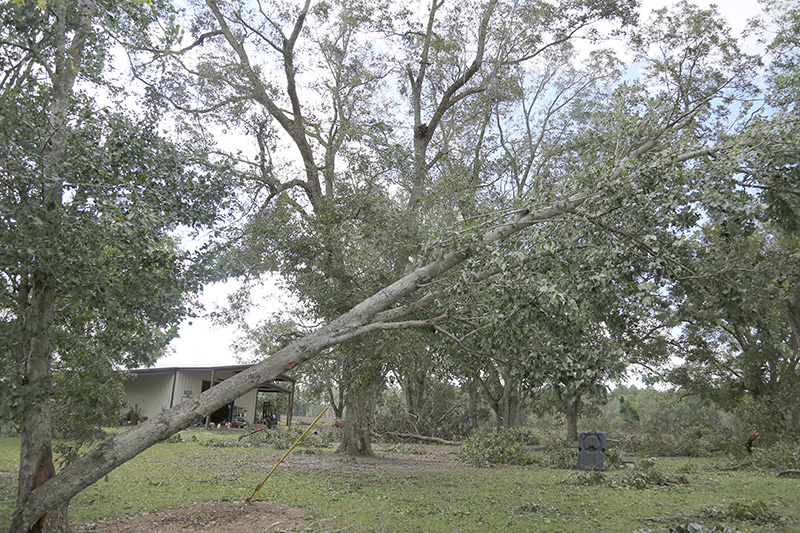 Damage from Hurricane Michael in Tift County that impacted a pecan orchard.