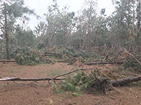 Hurricane Michael hit hard in the region which is one of the leading forest-producing areas in the country. Cleanup efforts are ongoing, but considerable timber remains on the ground due to limited access to funds for cleanup for both publicly and privately owned land.