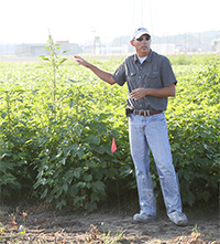 UGA Extension weed scientist Stanley Culpepper speaks about weed research during a field day.