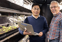 University of Georgia scientists WenZhan Song, left, and Marc van Iersel are working together to tackle the issue of energy efficiency in controlled-environment agriculture.