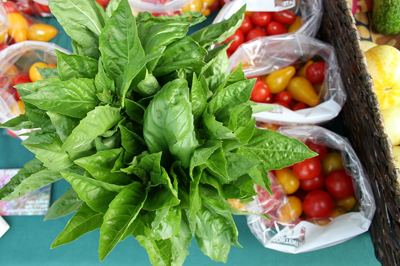 Basil is one of several herbs recommended for gardening this spring. It's an annual that prefers sun and moderate moisture.