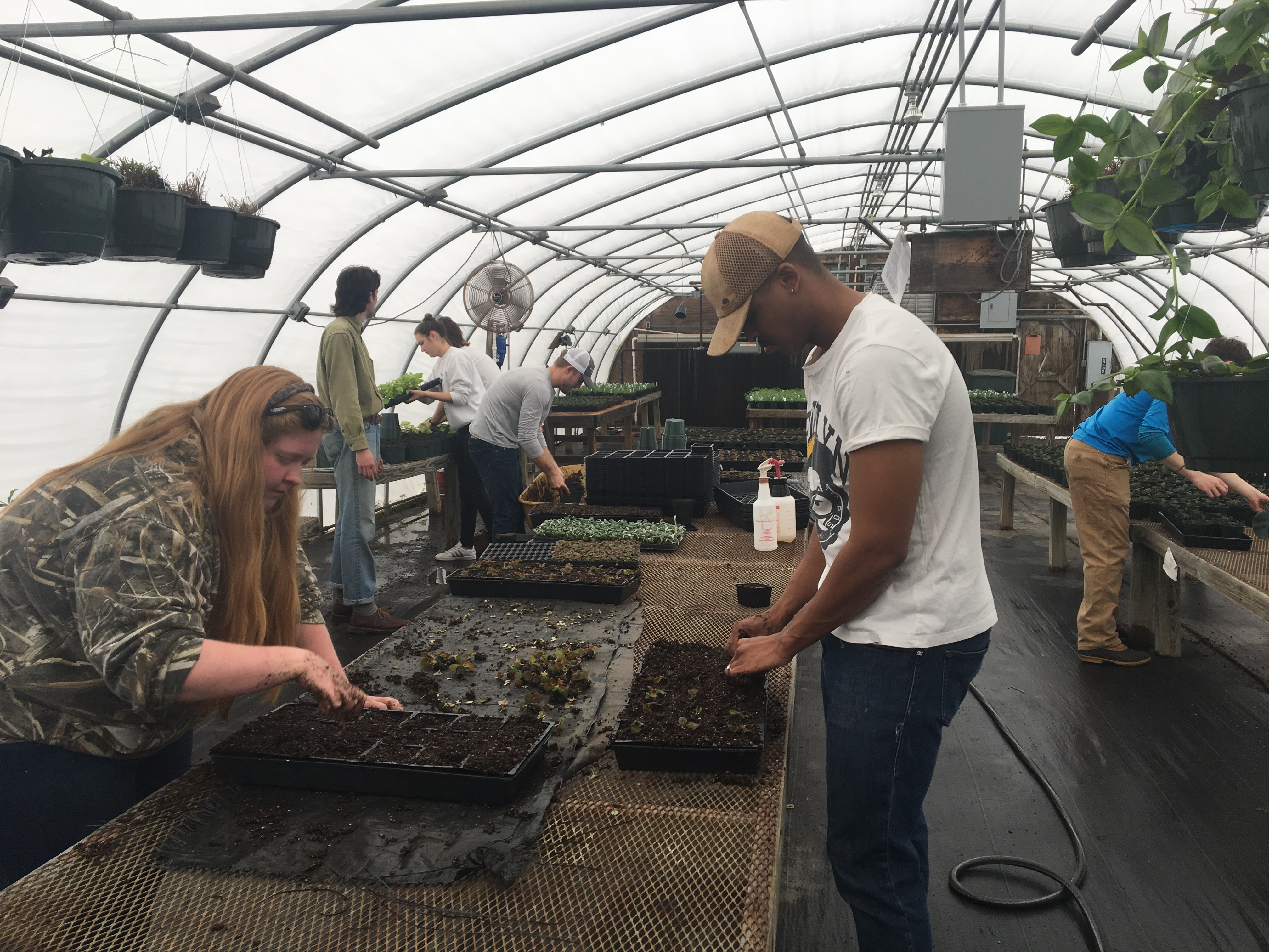 University of Georgia Horticulture Club students prepare for their 2019 Spring Plant Sale. The sale, April 6-8 and April 12-15, will take place at the corner of Riverbend Road and College Station Roads from 8 a.m. to 5 p.m. on Fridays and Saturdays at noon to 5 p.m. on Sundays.
