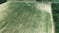 Pictured is an overhead view of a cotton field affected by deer in Burke County, Georgia. Deer can damage as much as 50 percent of a farmer's crop. Burke County Extension Agent Katie Burch may have found an effective deer deterrent in Milorganite fertilizer.