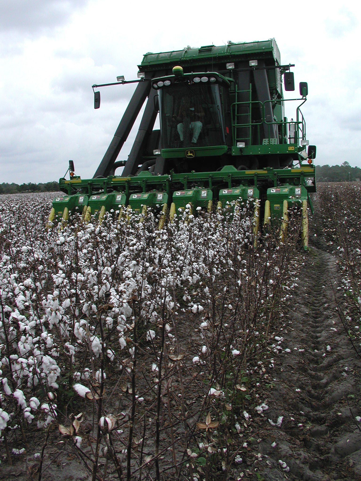Cotton yields may break records this fall, but prices are down almost 50 cents a pound from their high in 2010.
