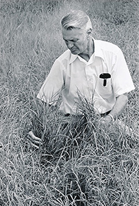 When he arrived in Tifton, Professor Glenn Burton quickly realized that the cattle industry in the Southeast U.S. suffered from a lack of quality forage grass, and he began experimenting with Bermuda grass around 1936 to help solve the problem.