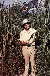 Glenn Burton inspects some rust resistant pearl millet.