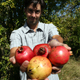Dan MacLean shows a few of the varieties of pomegranates he's been growing at a test plot in Tifton, Ga.