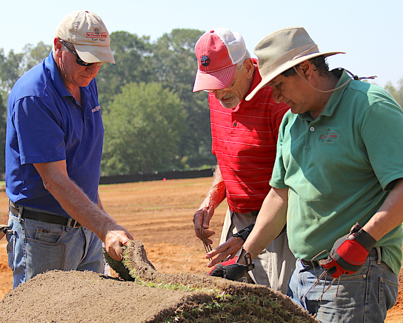 Georgia sod producers are scrambling to provide more zoysia this season. The popularity of the grass coupled with the wet growing season has their supplies running low. UGA turfgrass researchers Paul Raymer (left) and Alfredo Martinez (right) are shown inspecting a roll of sod with retired UGA Extension turfgrass specialist Gil Landry.