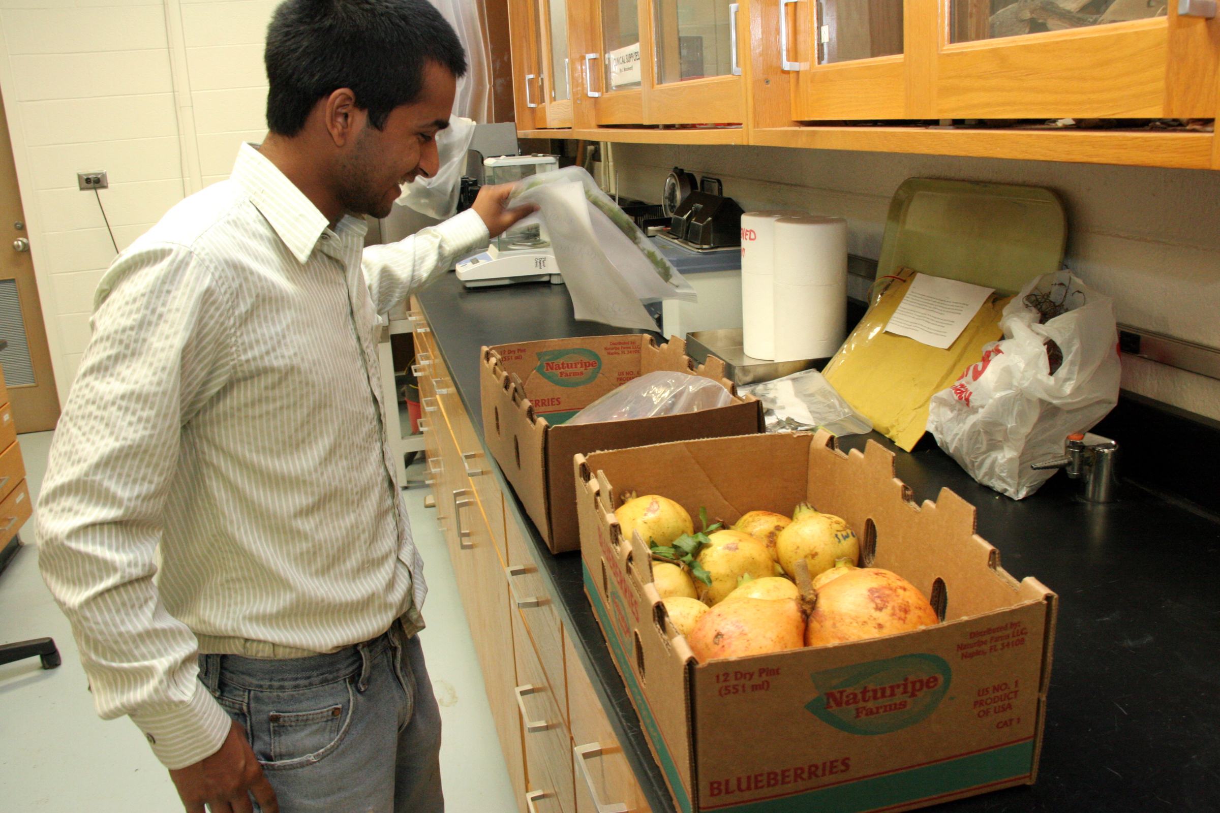 Lucky Mehra, a graduate student at UGA studying plant pathology in Athens, Ga., pulls out boxes of pomegranates picked by Dan MacLean at the UGA Tifton test plot.