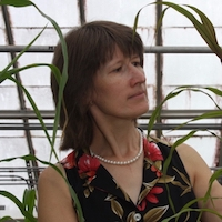 Katrien M. Devos, a professor of crop and soil sciences and plant biology at the University of Georgia, has been named a Fellow of the Crop Science Society of America (CSSA) in honor of her career studying evolutionary biology and working to breed more resilient crop varieties.