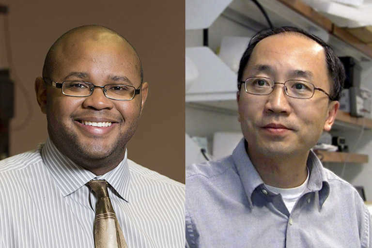 UGA scientists Franklin West and Qun Zhao have draw comparisons between sensory and cognitive relevance found in swine and those previously established in humans. Collaborators in the UGA Regenerative Bioscience Center, West and Zhao have discovered that pig brains are even better platforms than previously thought for the study of human neurological conditions such as Alzheimer's and Parkinson's.