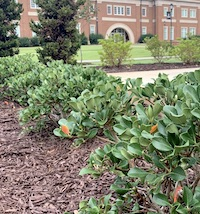 Now is the time to add a blanket of mulch to perennial flowers and shrubs. Maintaining a mulch layer at least 3 inches deep will significantly reduce weeds and help newly planted trees and shrubs get established and stay healthy.