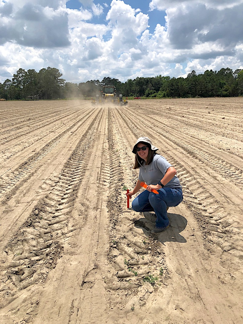 University of Georgia Cooperative Extension intern Lauren Dubberly is spending her summer working with Cook County Agent Tucker Price. She's shown marking a research trial in a peanut field. Dubberly says she is learning a lot about diseases found in fruit, vegetable and row crops.