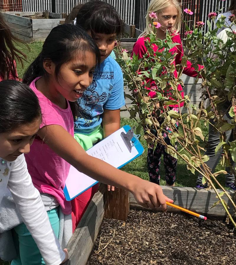 More Georgia students, like these at City Park Elementary in Dalton, Georgia, are learning science, technology, engineering, art and math by planting and tending school gardens.