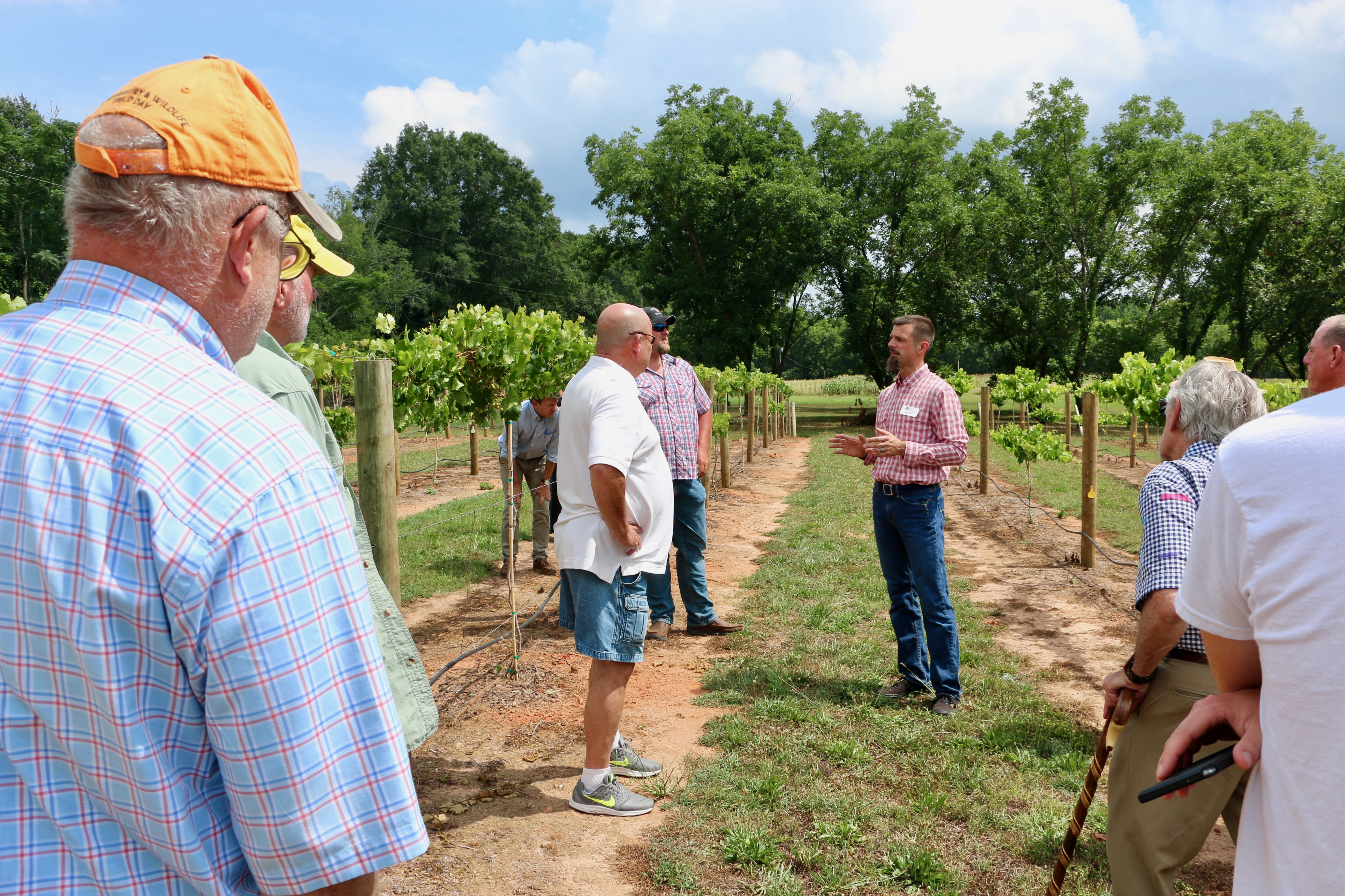 University of Georgia Cooperative Extension viticulture specialist Cain Hickey leads a tour of his muscadine vineyard outside of Athens.