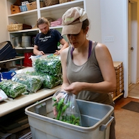 In addition to produce safety procedures, UGA Extension helps farmers develop record-keeping plans to help keep them in line with FDA food safety guidelines. Cory McCue of Woodland Gardens in Winterville, Georgia, makes notes about the farm's July harvest in the packinghouse while Christine White packs shishito peppers into 10-pound bags.