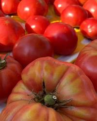 Tomato lovers will attest that homegrown always tastes best. But homegrown tomatoes don't always win beauty contests. Some are cracked, split, off-color or just plain ugly.
