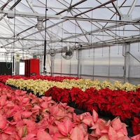 UGA agricultural economist Ben Campbell uses a poinsettia production system to illustrate the cost of shrinkage for greenhouse growers.