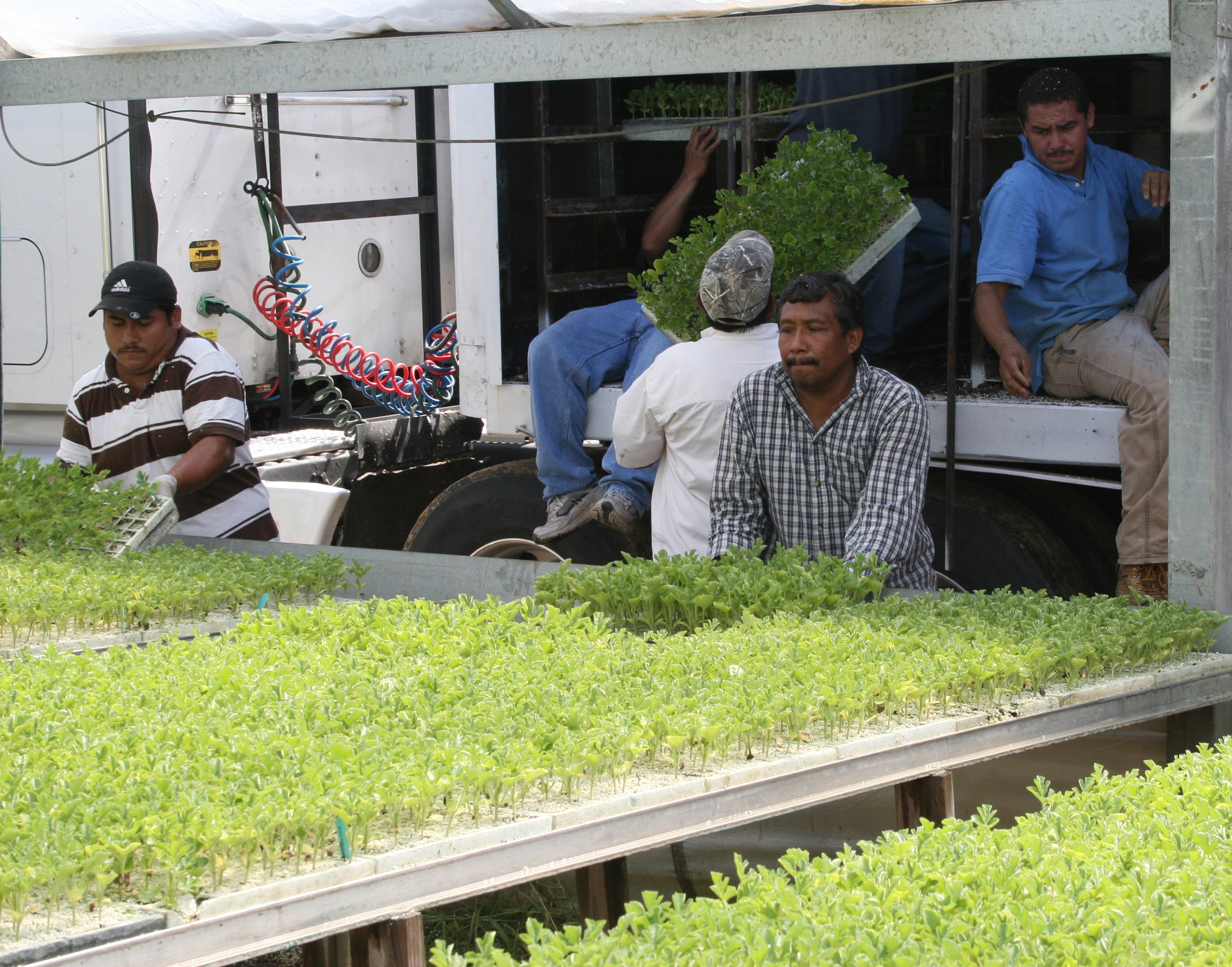 Farm workers load trays filled with vegetable transplants onto a truck at a greenhouse in Tifton, Ga.