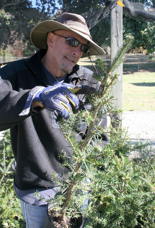 University of Georgia research coordinator Lamont Sudduth points out the grafting point on a plant that is a Fraser fir shoot grafted to Momi fir rootstock.