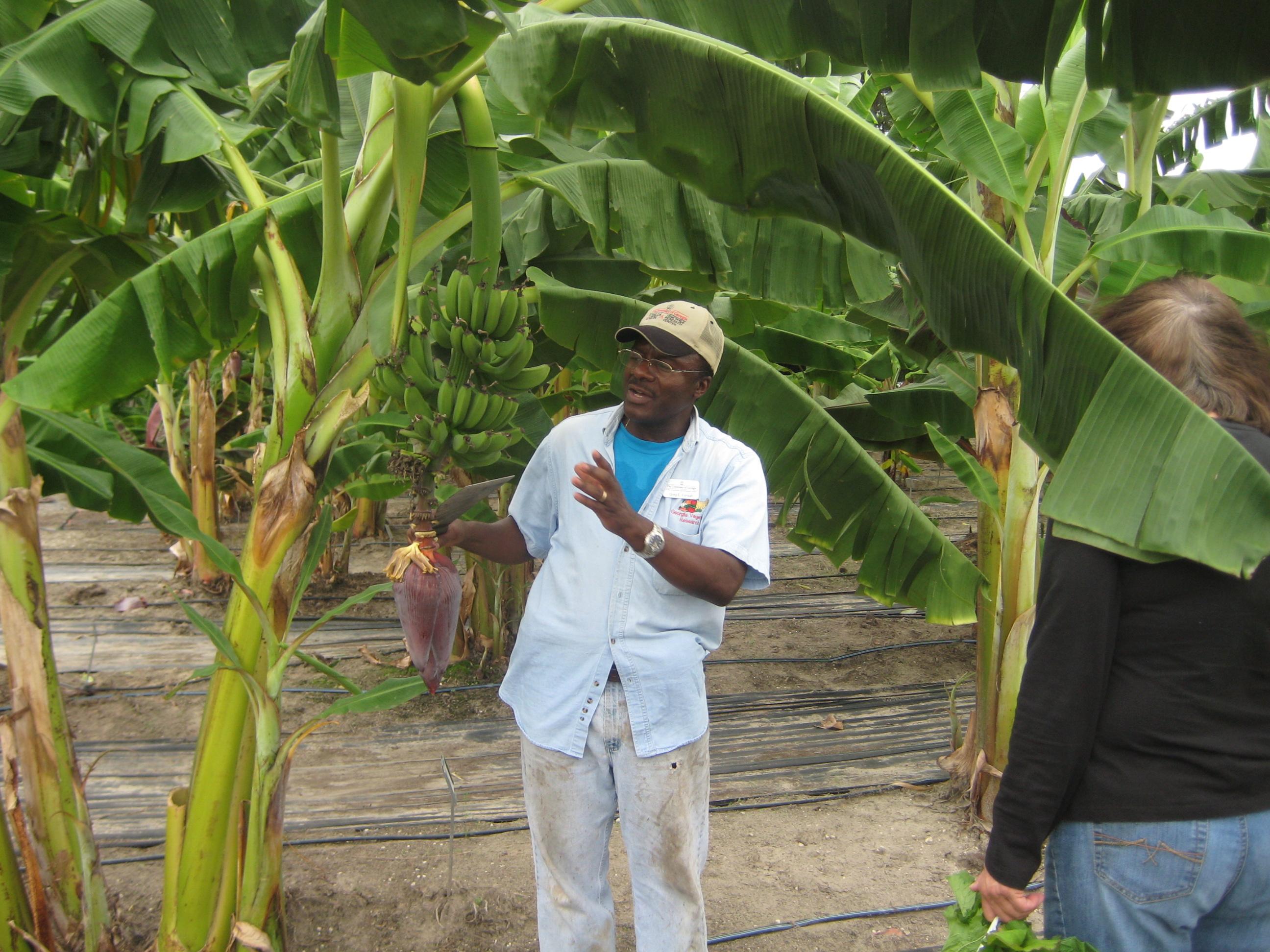 Greg Fonsah talks to guests viewing the banana trees on the UGA Tifton Campus.